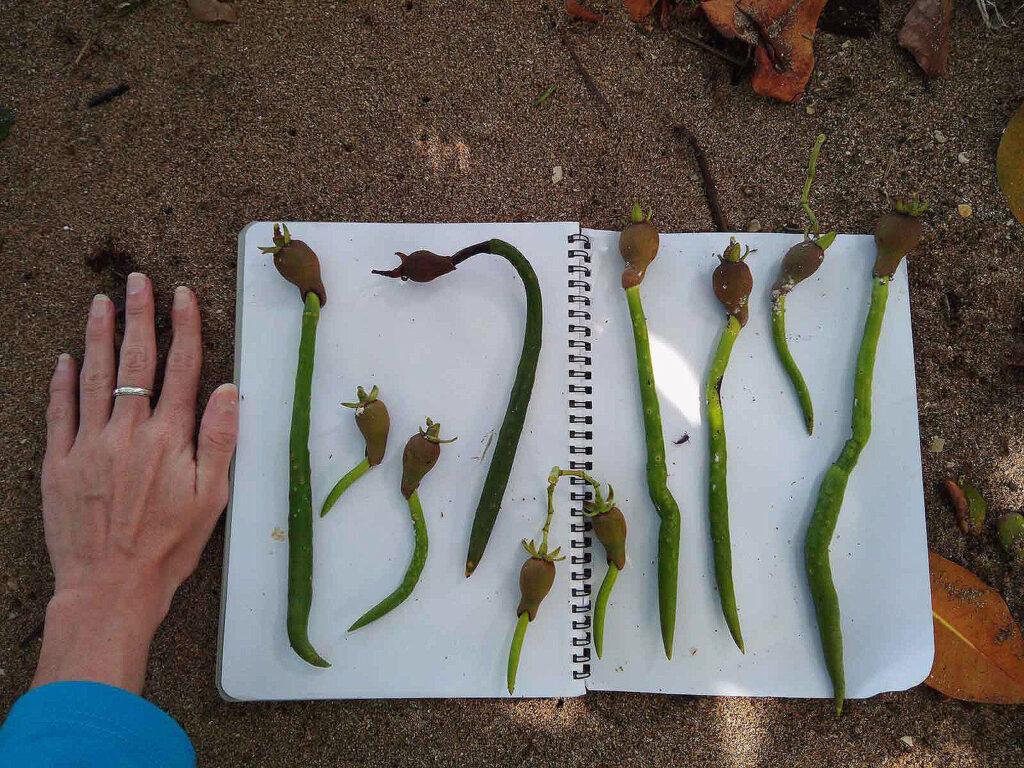 An app that uses visual indicators to monitor mangrove habitats